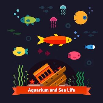 水中の海の生活。水族館