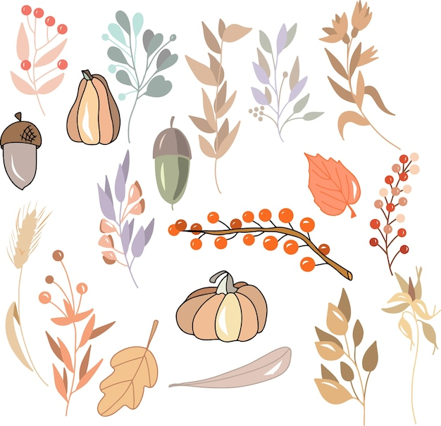 秋の植物のセット