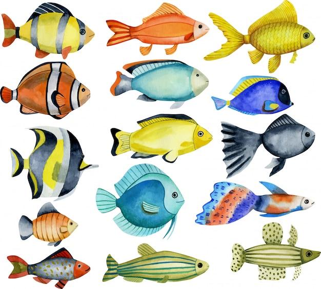 海洋魚、水彩画コレクション