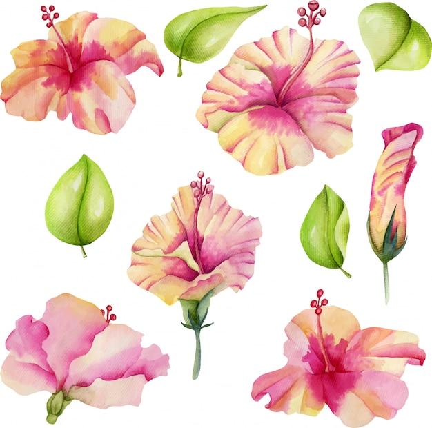 水彩ハイビスカスの花のコレクション