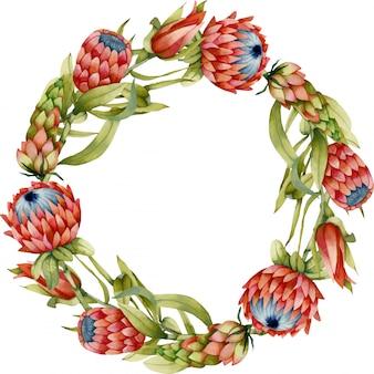 水彩のプロテアの花と花輪