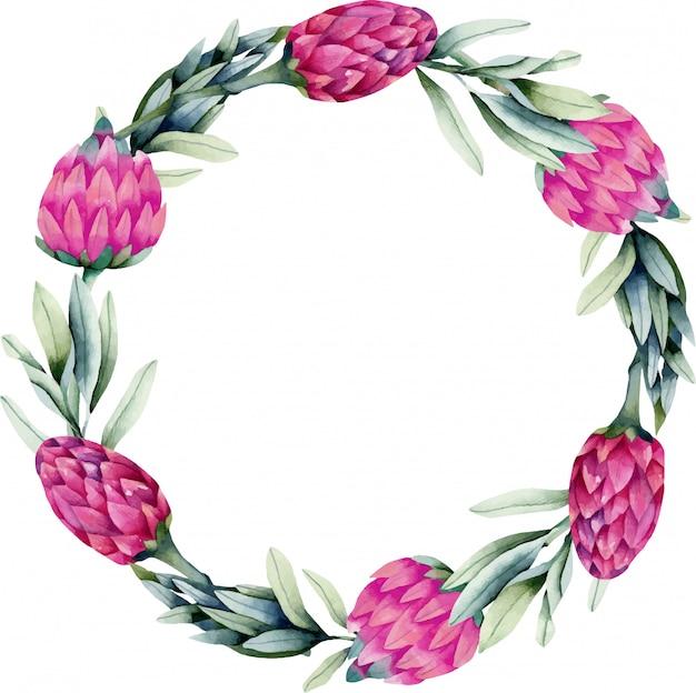 水彩のピンクのプロテアの花と緑の枝と花輪