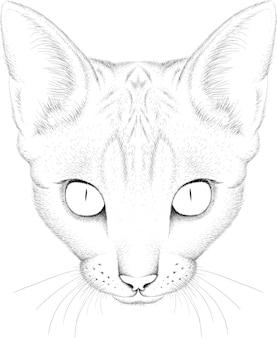 スフィンクス猫のチョークスタイルの手描きイラスト