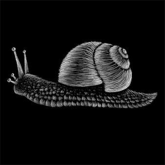 手描きのカタツムリのイラスト