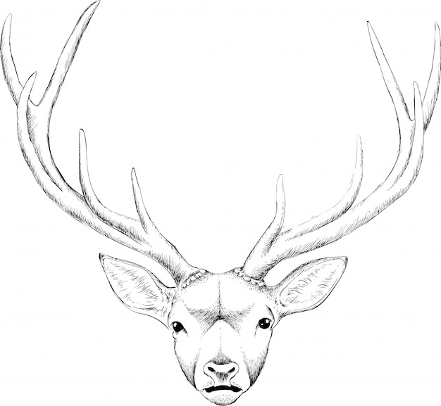 手描きの親愛なる頭の図