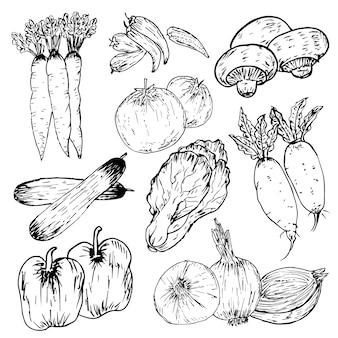 手描き野菜、有機ハーブやスパイスのセット、健康食品図面セット。