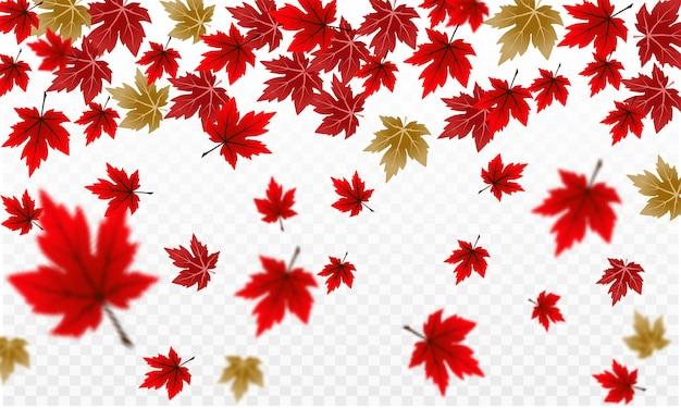 透明の赤い秋のカエデの葉デザイン