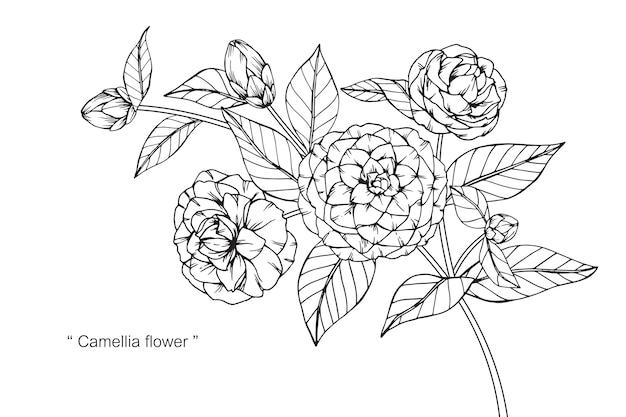 カメリアの花を描くイラスト