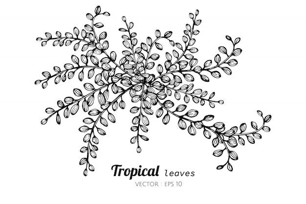 熱帯の葉のイラストを描きます。