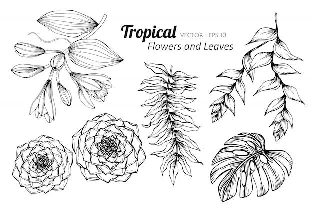 Комплект собрания тропического цветка и иллюстрации чертежа листьев.