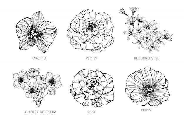 イラストを描く花のコレクションセット。