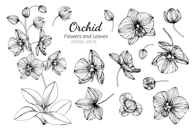 Комплект собрания цветка орхидеи и иллюстрации чертежа листьев.