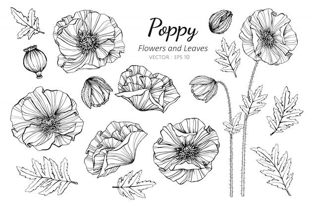 Комплект собрания цветка мака и иллюстрации чертежа листьев.