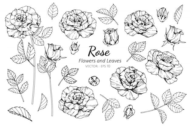 Комплект собрания розового цветка и иллюстрации чертежа листьев.