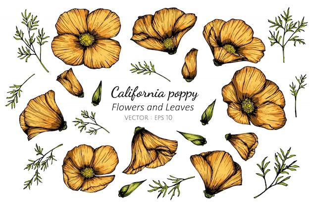 カリフォルニアのケシの花と葉の描画図のコレクションセット。