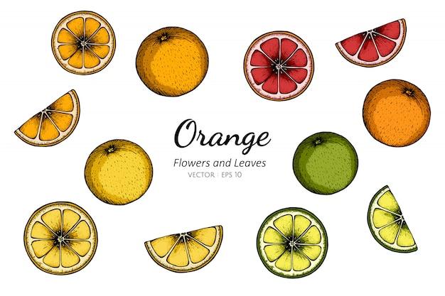 オレンジ色のデッサンイラストのコレクションセット。