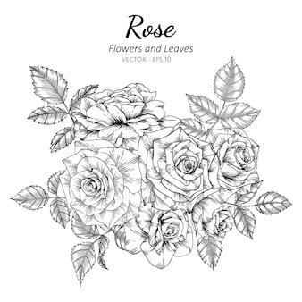 Комплект иллюстрации чертежа цветка розы с линией искусством.