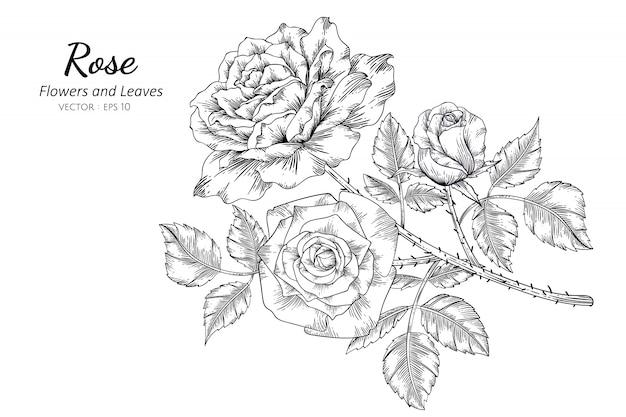 ラインアートとイラストを描くバラの花のセット