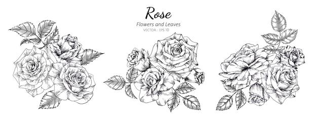 Набор розового цветка рисования иллюстрации с линии искусства