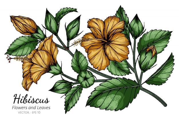 オレンジ色のハイビスカスの花と葉の白い背景のラインアートとイラストを描きます。