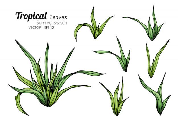 Комплект иллюстрации чертежа тропических лист с линией искусством на белых предпосылках.
