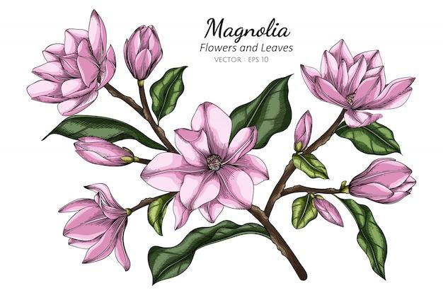 ピンクのマグノリアの花と葉のイラストを描く