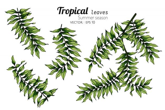 Набор листьев папоротника рисования иллюстрации с линии искусства на белом
