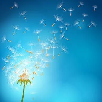 風で飛んで種とあふれたタンポポ