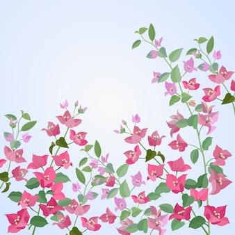Бугенвильские цветы