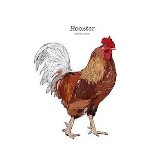 手描きの鶏、刻まれたスタイルのベクトル図。