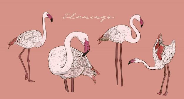 Набор фламинго, ручной рисунок эскиза рисования.