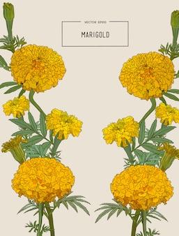 オレンジ色のマリーゴールドの花、イラスト。