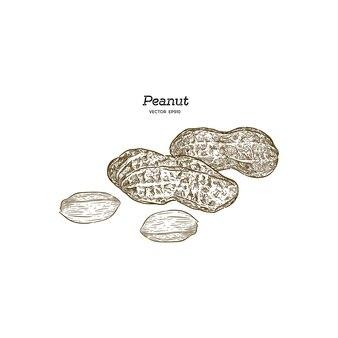 ピーナッツのベクトルイラストセット