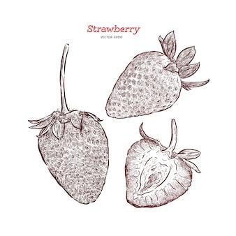 ストロベリーベクトル描画セット。夏の果物には、スタイルの図が刻まれています。詳細なベジタリアン料理
