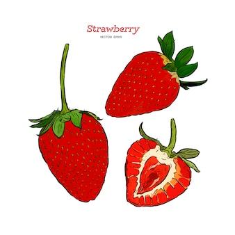 ストロベリーベクトル描画セット。夏の果物には、スタイルの図が刻まれています。