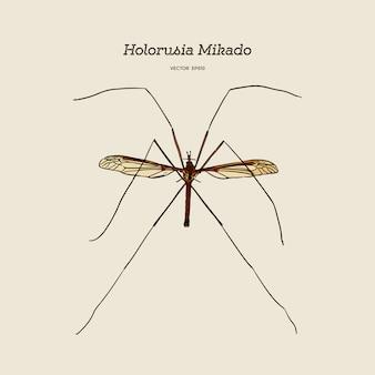 ホロルシアミカド、最大の真のクレーンハエの属。手描きのスケッチのベクトル。昆虫