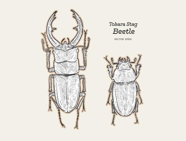 Рука рисовать токара красный жук-олень