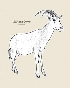Орикс-ятаган или рог-ятаган, также известный как сахарский орикс, рисуют эскиз от руки.