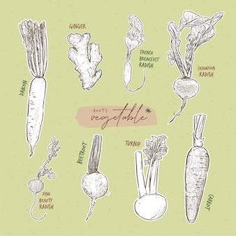 Коллекция корневых овощей, рука рисовать эскиз.