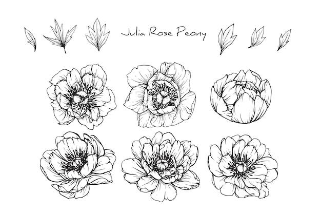 牡丹ジュリアは、葉や花の絵を描いています。ヴィンテージ手描きの植物イラスト。