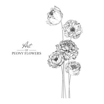Пион-лист и цветочные рисунки. винтаж рисованной ботанические иллюстрации.