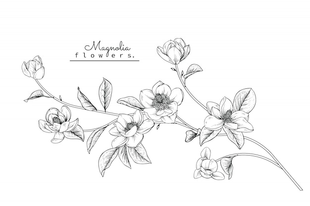 マグノリアの葉と花の絵