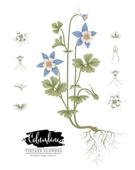 Эскиз цветочная коллекция ботаники