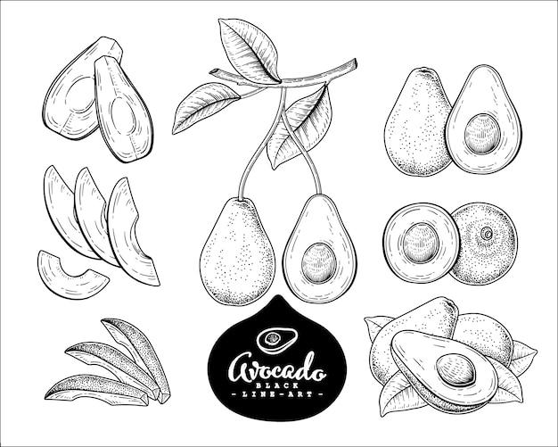 ベクタースケッチアボカド装飾セット。手描きの植物イラスト。