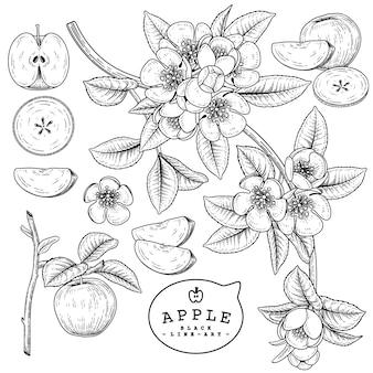 ベクトルスケッチアップル装飾セット。手描きの植物イラスト。