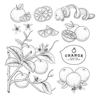 ベクタースケッチ柑橘系の果物の装飾的なセット。オレンジ。手描きの植物イラスト。