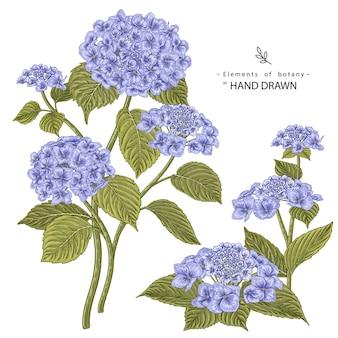 Эскиз цветочный декоративный набор. гортензия цветочные рисунки. старинные линии искусства, изолированные на белом фоне. рисованной ботанические иллюстрации. элементы