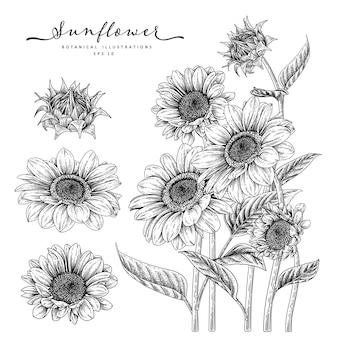 Эскиз цветочный декоративный набор. рисунки подсолнечника. черный и белый с линией искусством, изолированные на белом фоне. рисованной ботанические иллюстрации. элементы