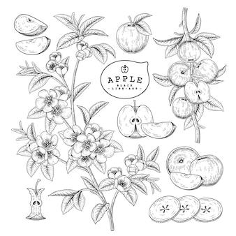 ベクトルスケッチアップル装飾セット。手描きの植物イラスト