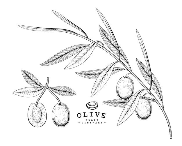 ベクタースケッチオリーブ装飾セット。手描きの植物イラスト。黒と白の白い背景で隔離のラインアート。工場図面。レトロなスタイルの要素。